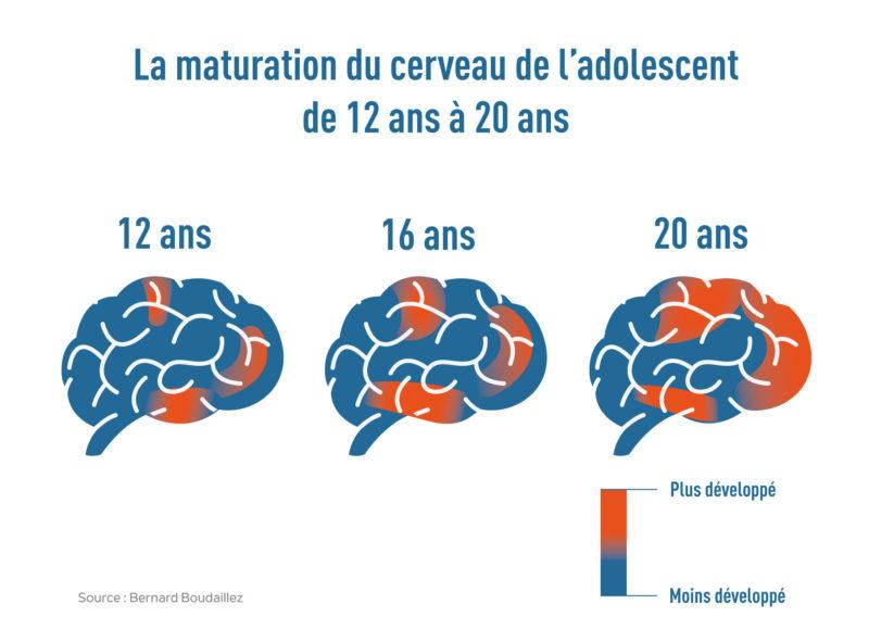 Maturation Du Cerveau Adolescent
